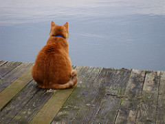 Cat on dock