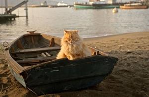 cat-in-boat